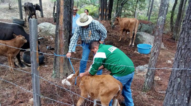 """Todo listo para que este viernes arranque la Expo Rural """"Morelia 2016"""""""