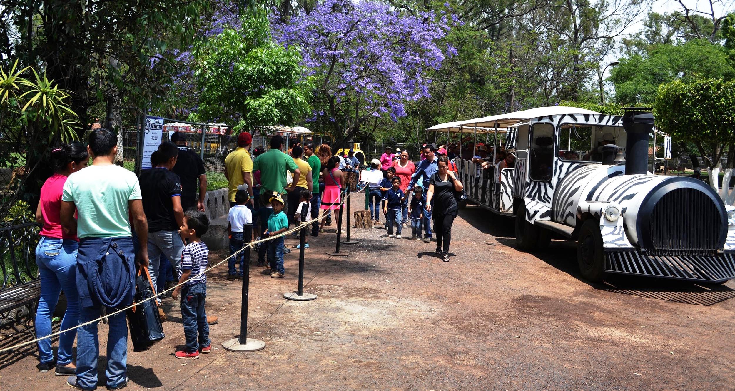 """En 2016 más de 743 mil personas visitaron el Parque Zoológico """"Benito Juárez"""""""