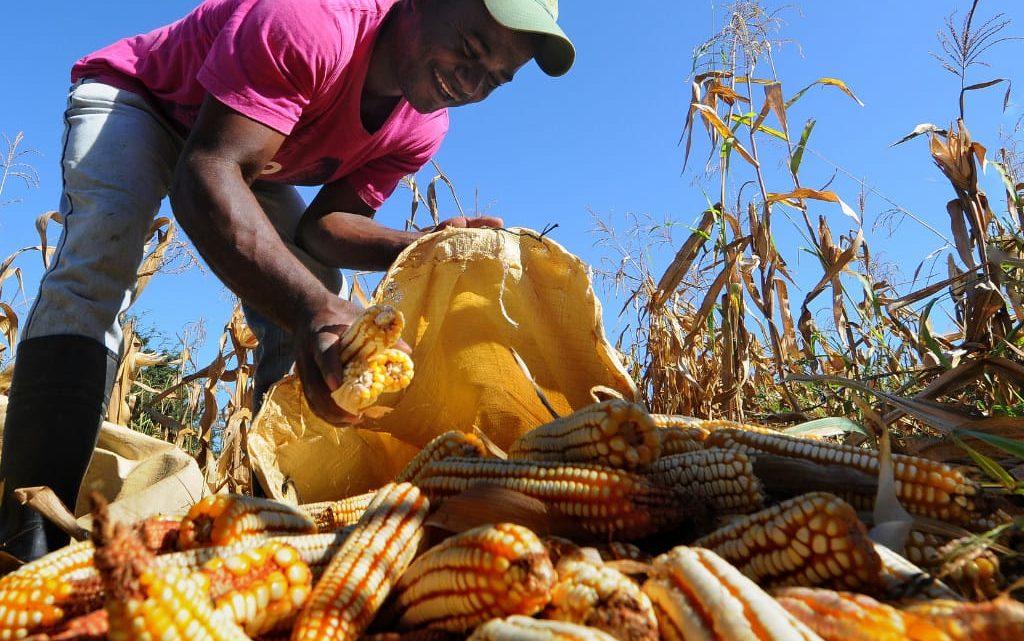 Abierta convocatoria para Agricultura por Contrato